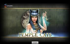 temple-cats